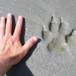 hand_paw