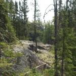Western Great Lakes wolf habitat