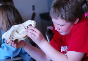 Augment your classroom experience with Wolf Discovery Kit accessories