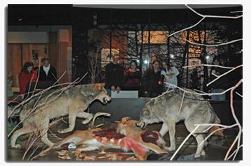 wolveshumans
